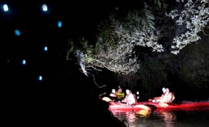 Glow worms night